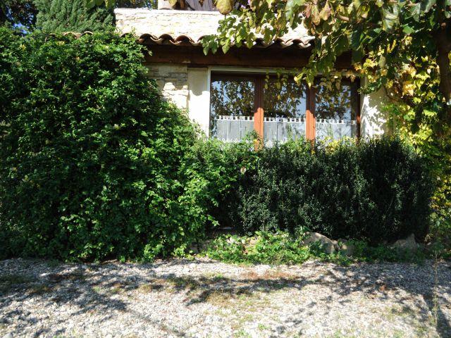 devant l\'olivier