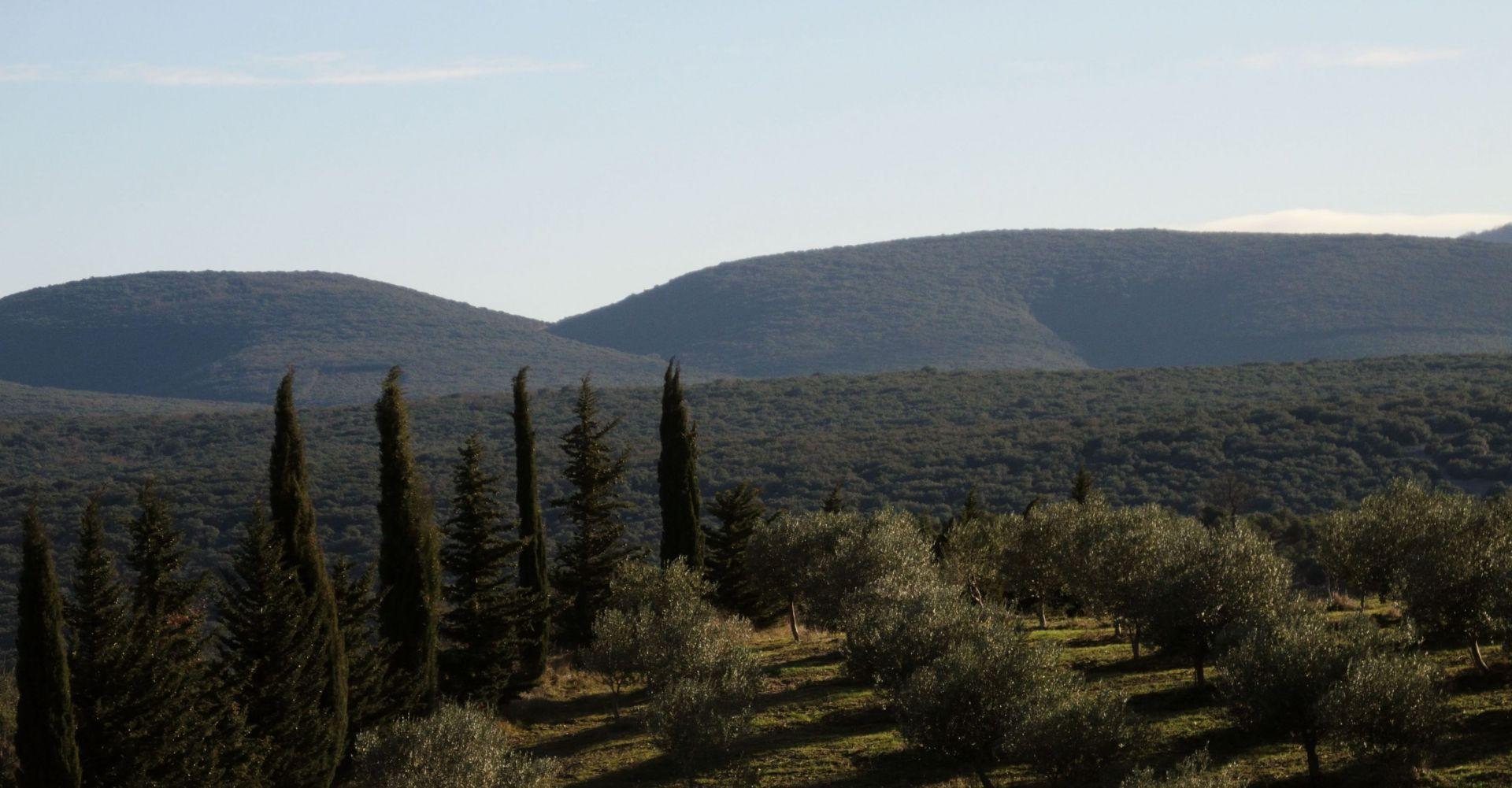 La plus grande oliveraie bio d'Ardèche